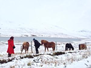 Red riding hood in Iceland